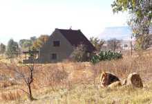 Photo of ნაკრძალში ქირავდება სახლი, რომლის მეზობლად 77 ლომი ბინადრობს