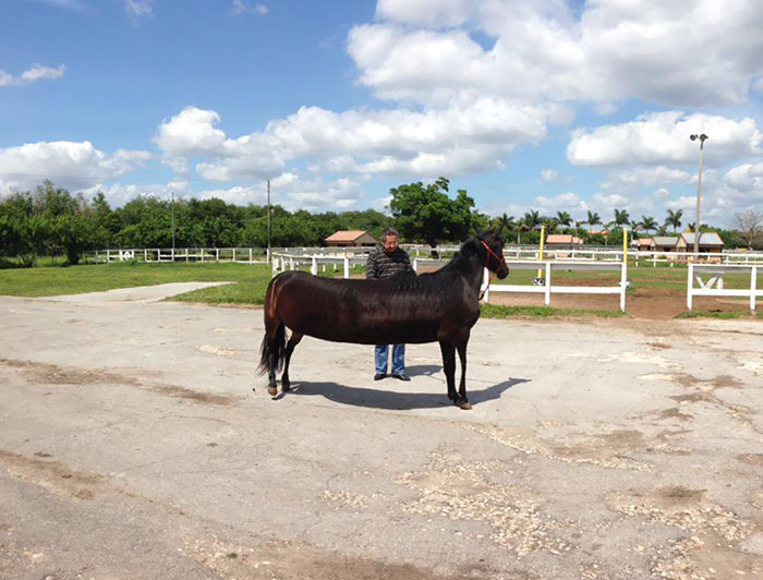 When I Tried To Take A Panorama Of A Horse