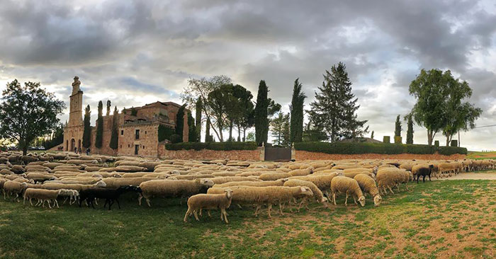 Ayllon's Sheeps Are Different. So Different