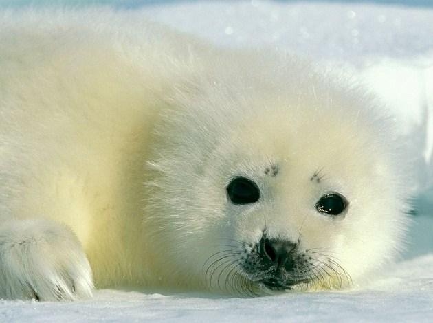 Photo of National Geographic: პატარა ცხოველების ფოტოები