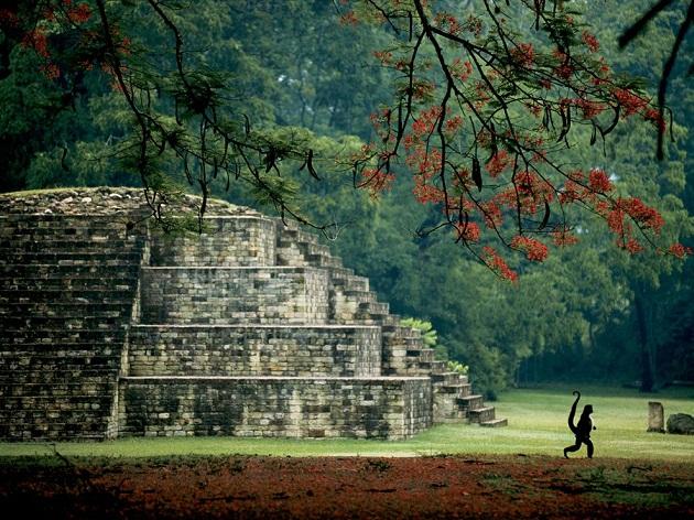 maya tomb honduras garrett