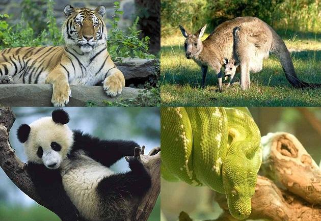 Photo of მითად მიჩნეული ცხოველები