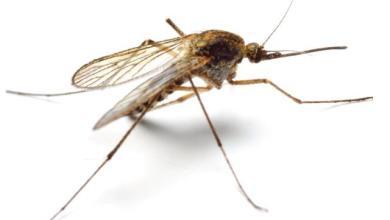 Photo of შესაძლოა თუ არა ზიკა ვირუსით ტვინის სიმსივნის დამარცხება