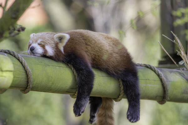 Photo of შეუძლიათ თუ არა ცხოველებს ძილის გარეშე?