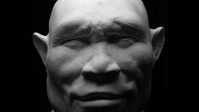 Photo of როგორ გამოიყურებოდნენ ადამიანთა წინაპრები?