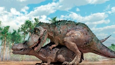 Photo of როგორ ახერხებდნენ სექსს დინოზავრები?