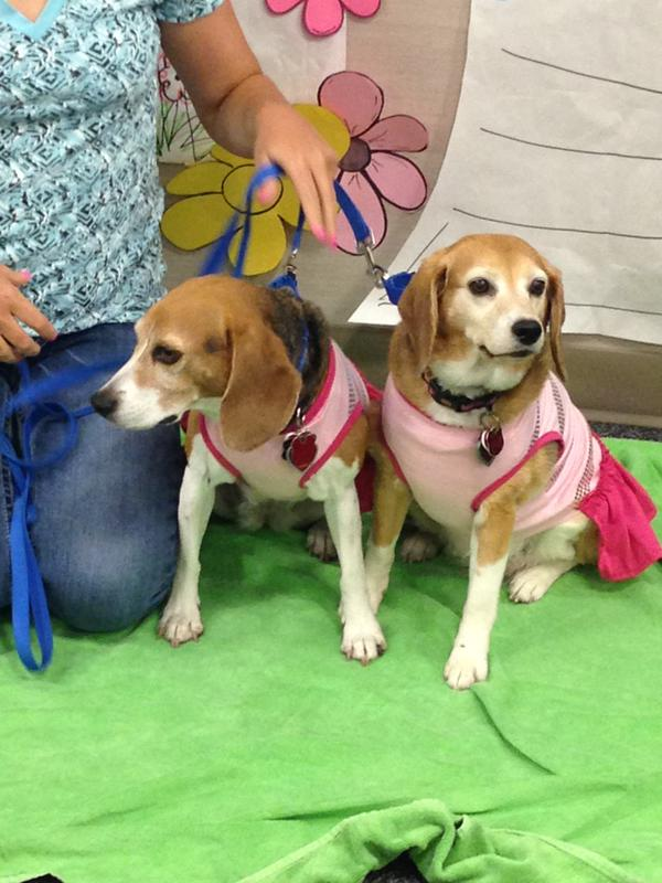 Therapy dogs dressed in summer best