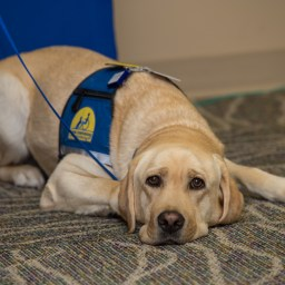 Meet Lorenzo, the new facility dog at McLane Children's