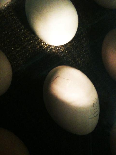 Hatching day arrived... (1/6)