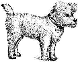 dog, cross-eyed, toy