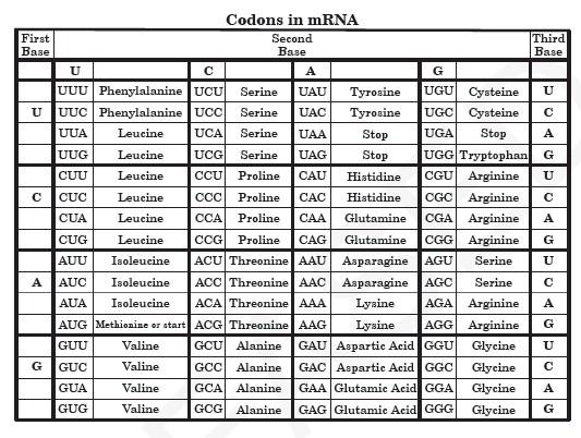 Codon Chart Circle Mrna