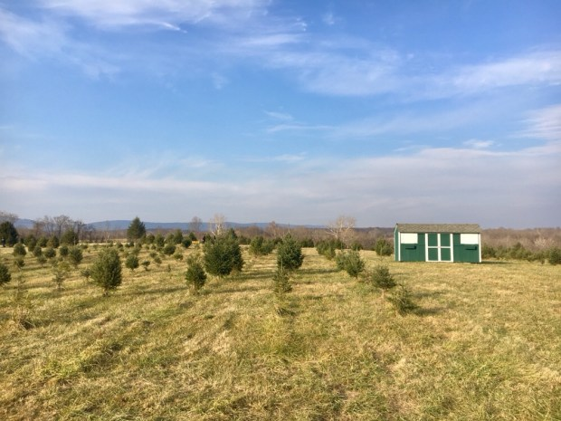 Our Christmas Tree Tradition - Let's Go Places - SCsScoop.com