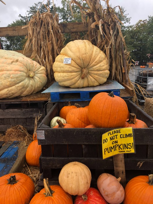 Nalls Produce - Giant Pumpkin - Picking out Pumpkins & Produce in Northern Virginia - SCsScoop.com