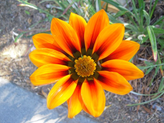Flowers 036