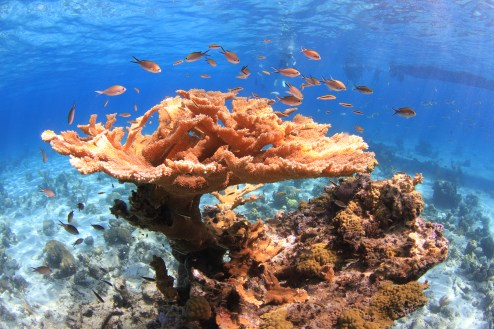 Coral at School House Reef