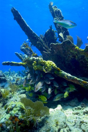 The nine historic ships of the Florida Keys Shipwreck Trail provide sanctuary visitors with an on-site history lesson. The remains of the City of Washington, which ran aground and sank on July 10, 1917, lie on Elbow Reef. Divers can explore the 325-foot-long wreck site and follow the contour of the ship's hull. (Photo credit: NOAA)