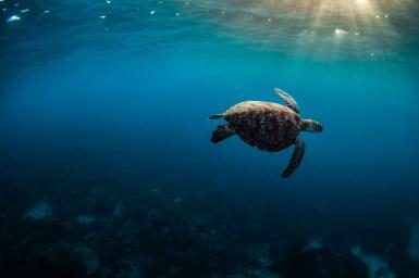 Underwater-75