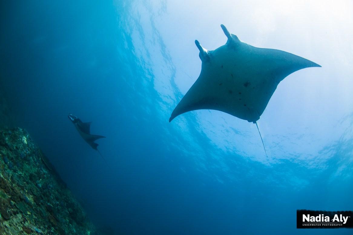 Diving Manta Point