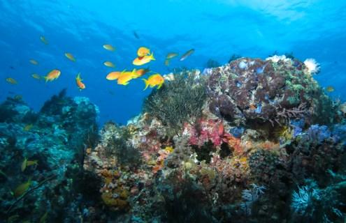 Situ Diving