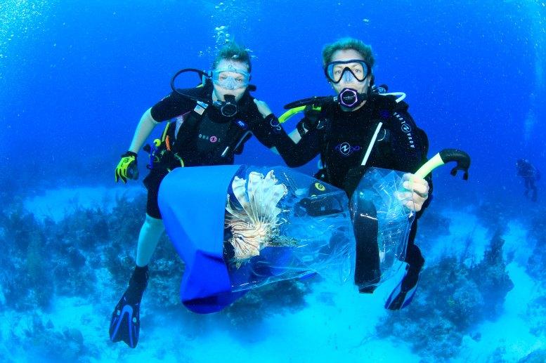 lionfish1-stuart-coves-dive-bahamas_web