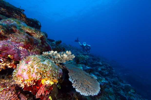 National Marine Sanctuary of American Samoa supports an incredible diversity of marine life. What will you discover when diving here? (Photo: Greg McFall/NOAA)
