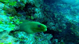 Moray-eel_web