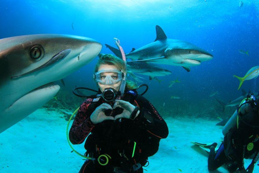 shark love!