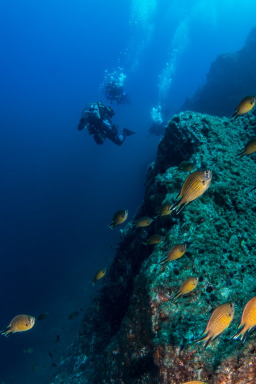 Crystal-clear water and plentiful fish life grace nearly every dive on Terceira. (Photo credit: Joao Bruges)