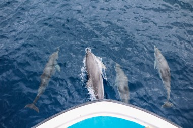 Spend a dry day searching for whales and dolphins topside on a whale-watching tour with Ocean Emotion — you may even get an escort. (Photo credit: Kenzo Kiren)
