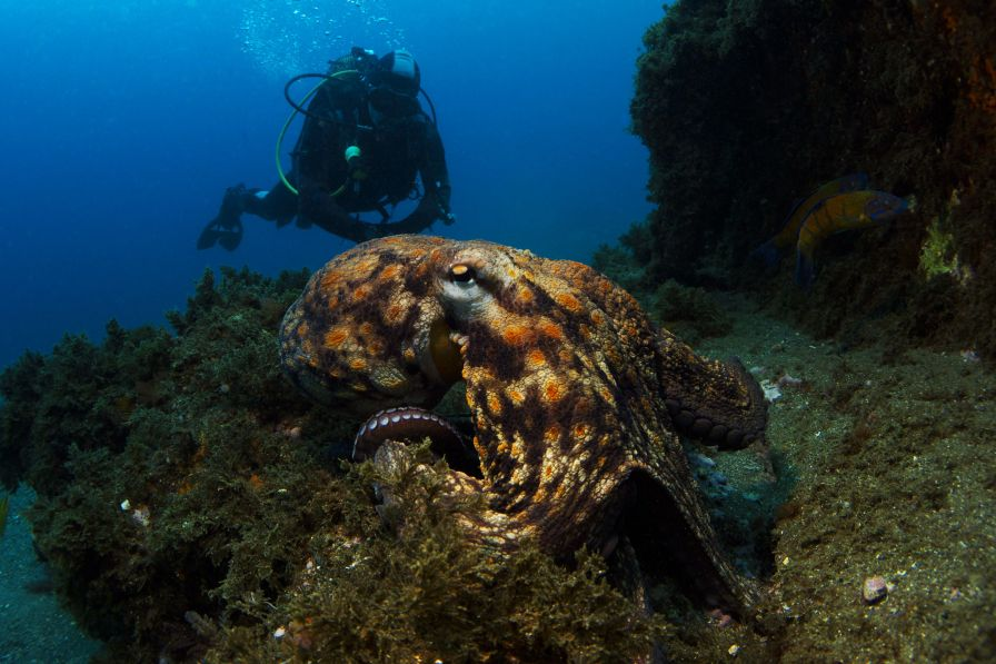 The wreck of the Lidador is home to lots of small fish and at least one friendly octopus. (Photo credit: Joao Bruges)