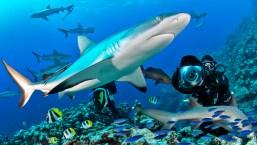 Private shark shoot dive