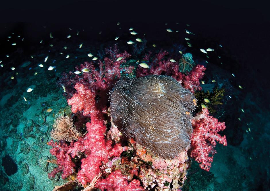 Courtesy Reef World Foundation