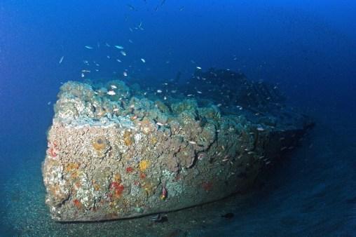 Invertebrates live on Monitor's hull, while fish swim around it. (Photo credit: NOAA)
