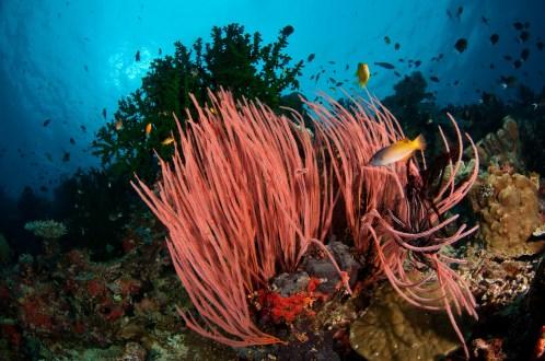 Tufi Offshore Reefs