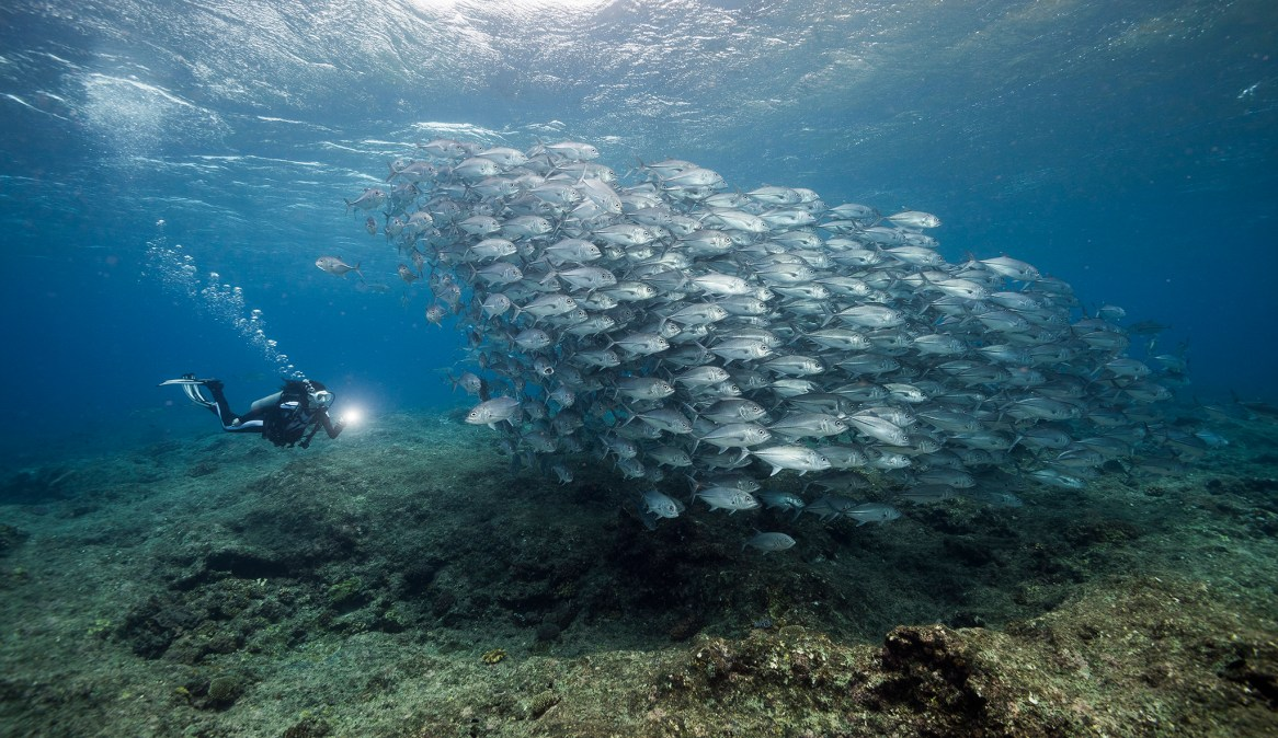 One of my favorite dives on the uninhabited Mary Island, Ben's Point was a swirling cauldron of activity, attracting huge schools of fish. (Photo credit: Matt Smith)