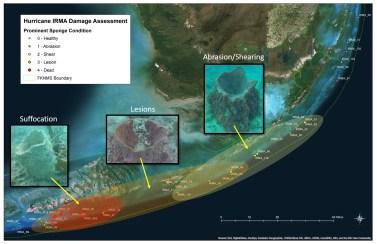 Sponge Impact Zones