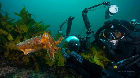 Giant cuttlefish at Shelly Beach. Photo by Pete McGee