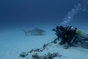 Watching bull sharks at Shark Point (Photo Credit: Patrik Meier)