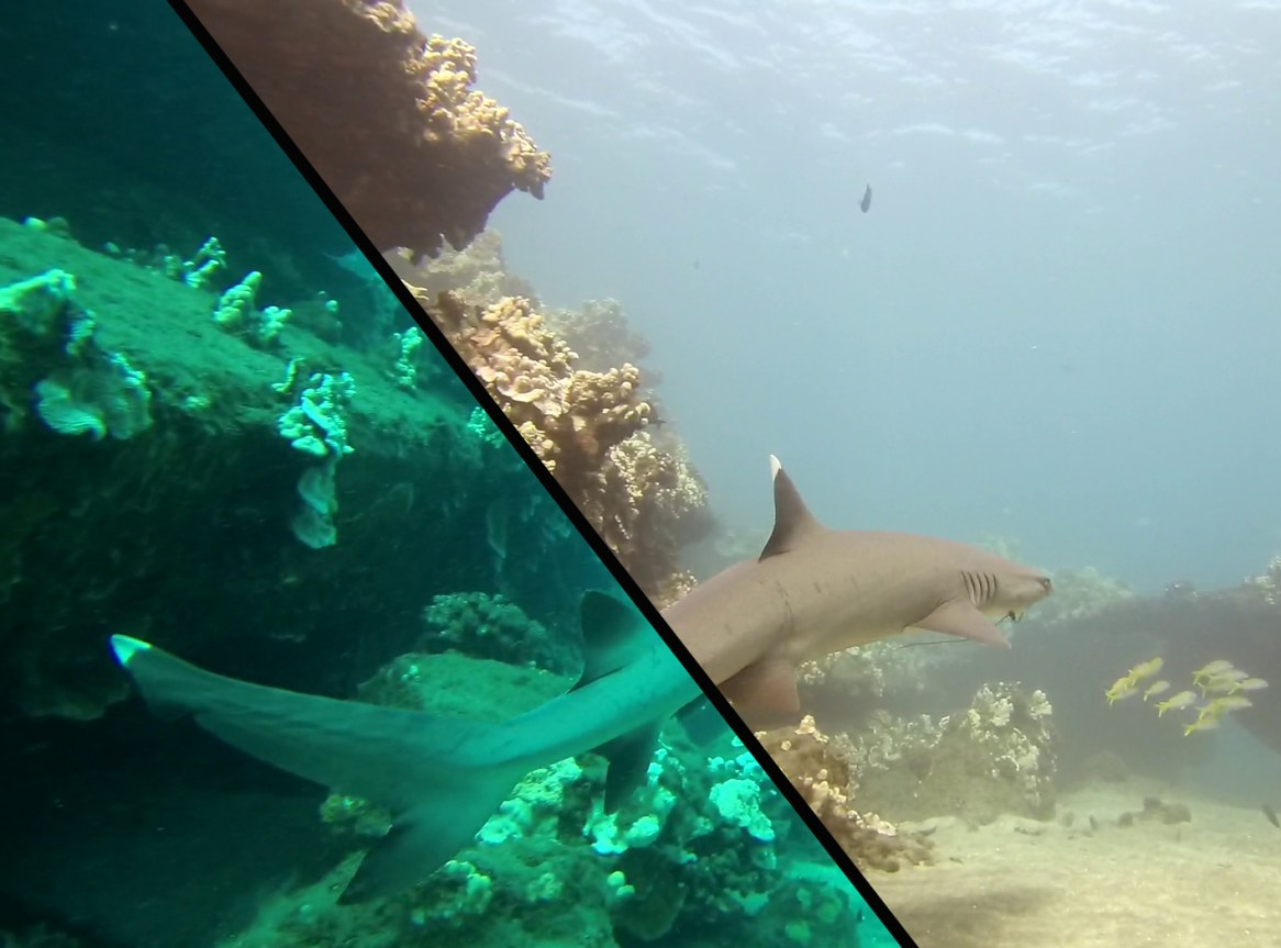shark-dcc-on-off