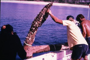 Anchor placed at Urca de Lima (Photo: Florida Division of Historical Resources)