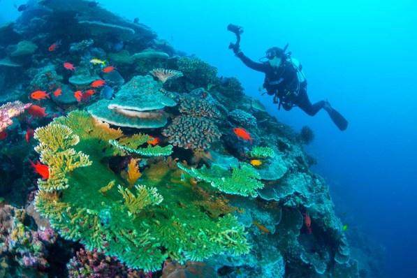 Scuba Diving Christmas Island Australia