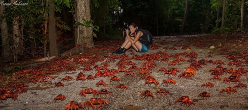 The world-famous red crab migration happens every year during the rainy season. (Photo credit: Kirsty Faulkner)