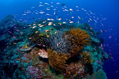 The fringing coral reefs are some of the world's most pristine. (Photo credit: Mathieu Meur)