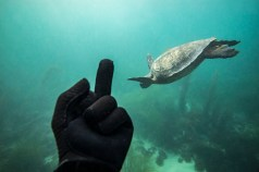 Flipping off a turtle in San Diego