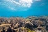 Agincourt Reef Credit Tourism and Events Queensland