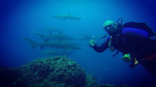 Diver with sharks at Wolf Rock - Credit Wolf Rock Dive Centre