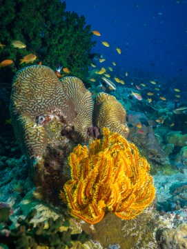 Dive sites both inside the fjord and on the outer reefs are a riot of color at Tufi. (Image courtesy of Tufi Dive Resort)