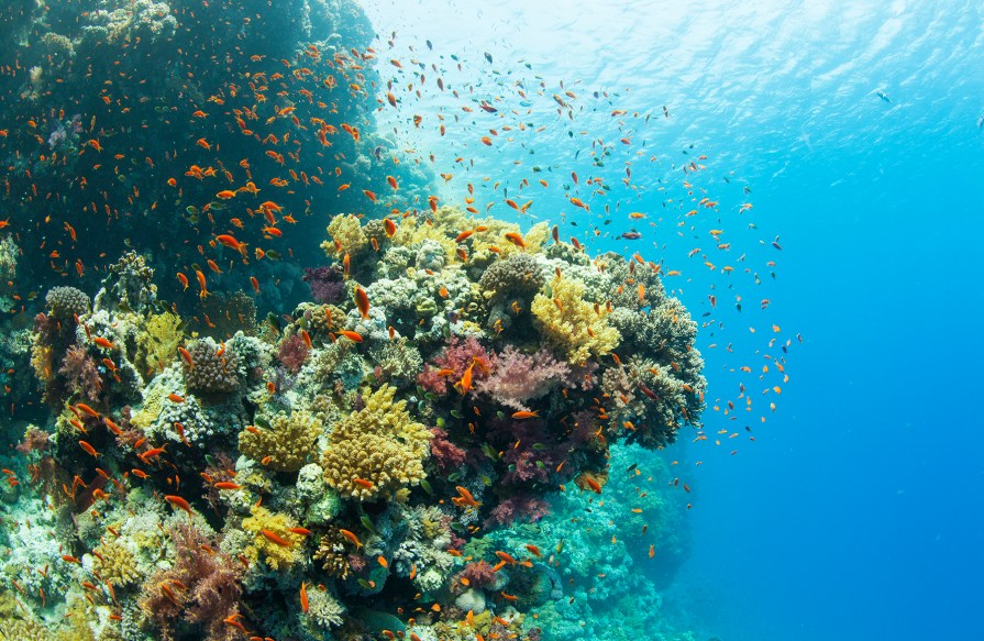 The Red Sea offers an abundance of Technicolor dive sites