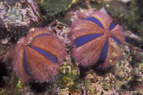 Myanmar sea life (Credit Mark Strickland)