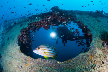 Take a dive torch even on daytime dives so that you can better pick out marine life and illuminate the colors of the wreck (Photo: Nadia Aly)